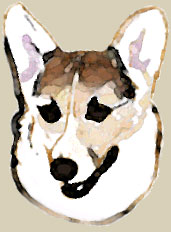 Art piece of Corgi titled 'Zippy Painted'
